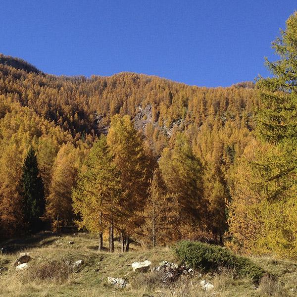 L'automne arrive… Etes-vous prêts ?
